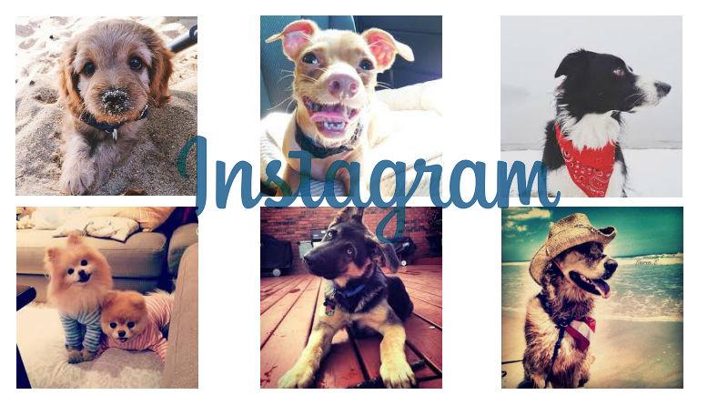 instagramkutyaknak