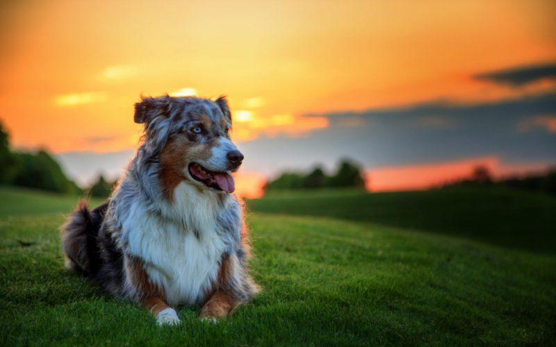 Kutya a naplementében