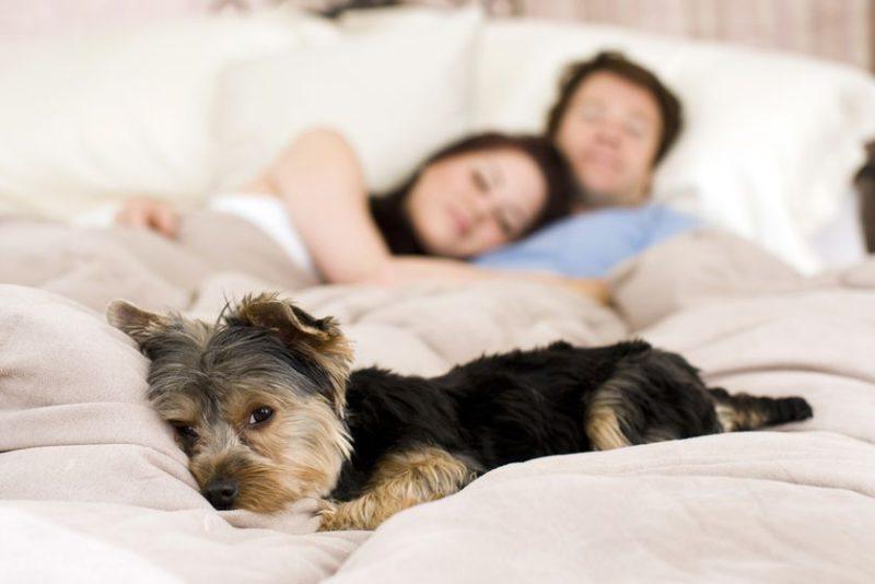 Együtt alvás
