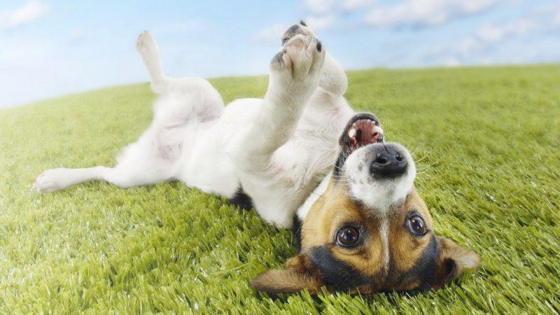 52c573e429 10 dolog, amit biztosan nem tudtál a kutyákról – KutyaSarok