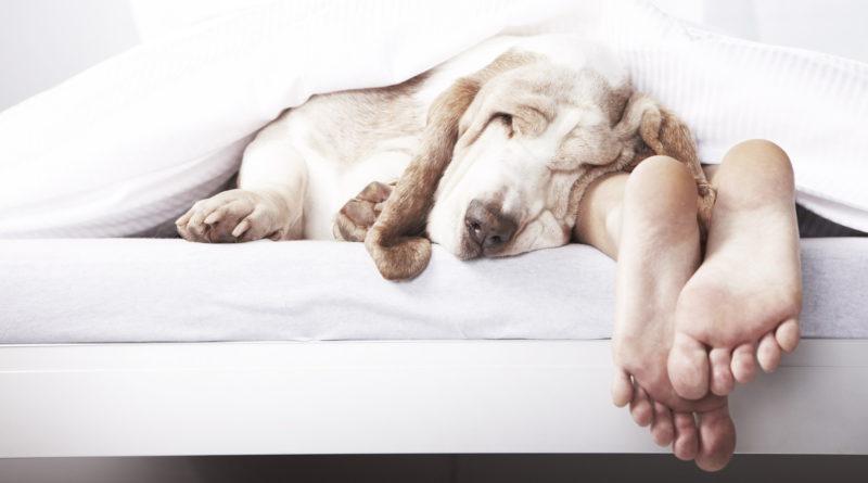 Alvás az ágyban
