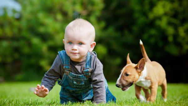 Kutyus és baba