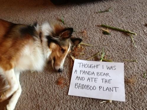 Rossz kutya