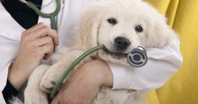 Az állatorvosnál