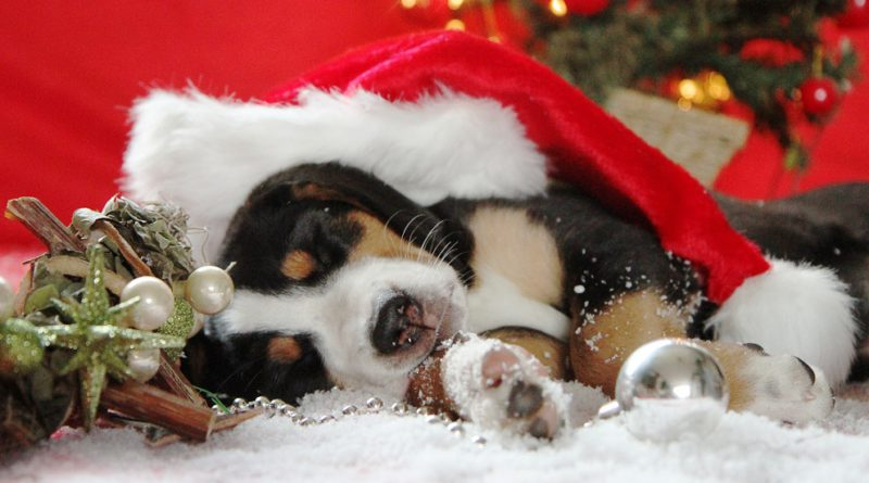 Kiskutya karácsonyra