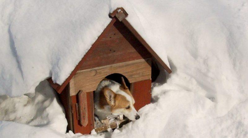 Téli kutyus