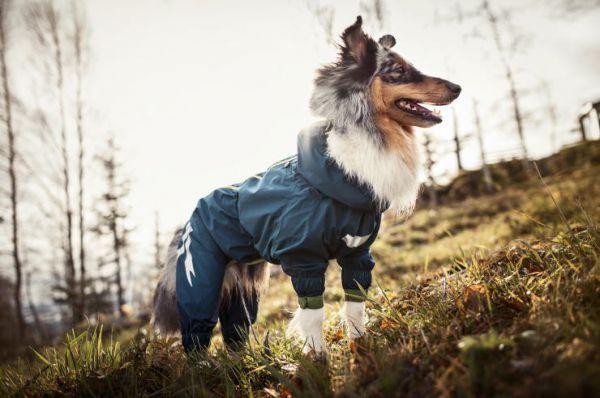 Finn kutya