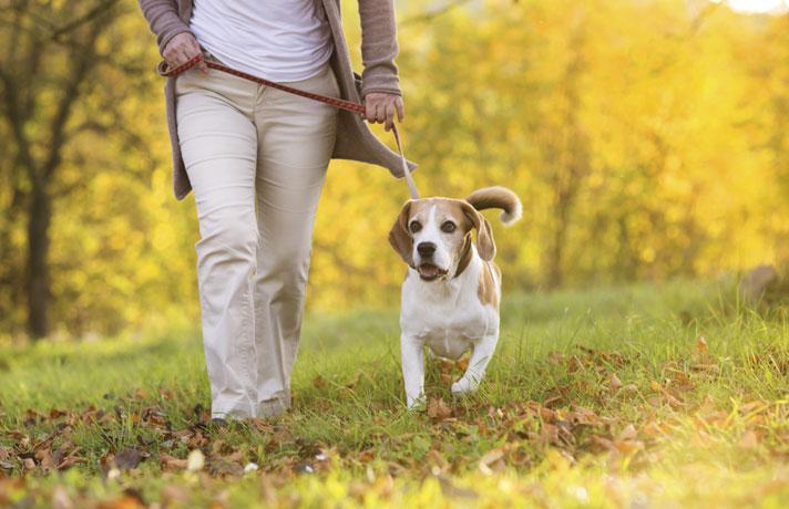 kutyamérgezés