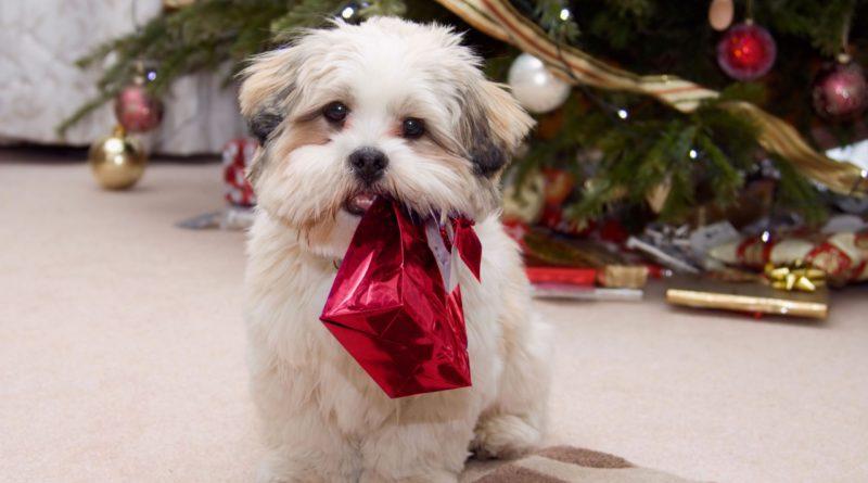 Kutyás karácsony
