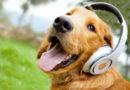 Vajon kedvenceink melyik zenestílust hallgatják a legszívesebben?