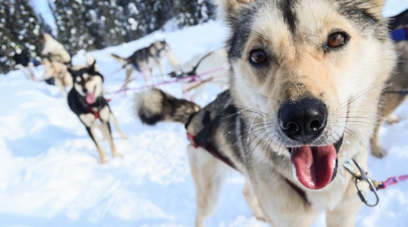 Téli kutyatartás