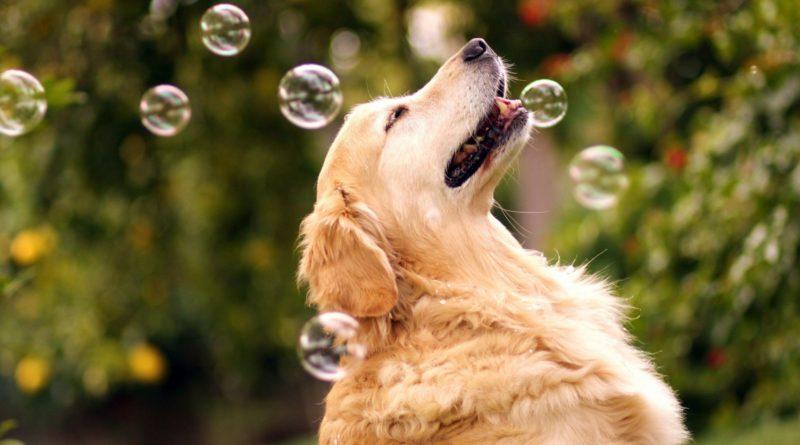 Boldog kutyus