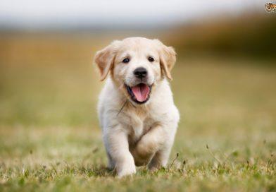A kutyáknál is van dackorszak