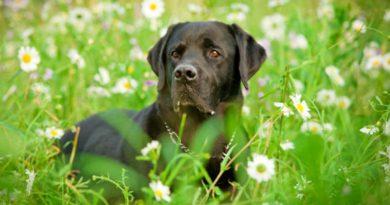 Kutya a természetben