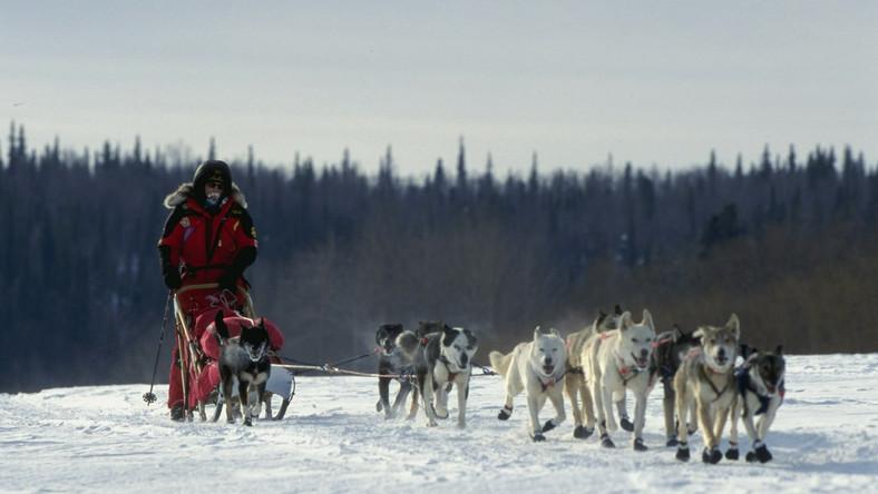 Kutyaszán verseny