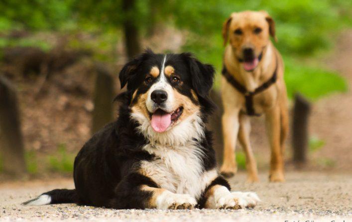 kutyák_gönye csaba1
