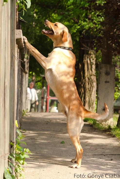 kutyák_gönye csaba2