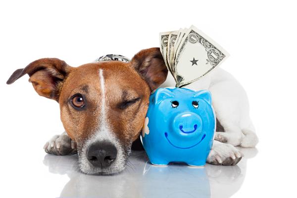 Új adót vethetnek ki a kutyatartókra