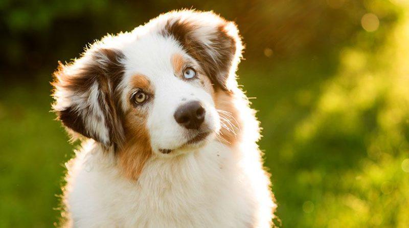 Common-dog-behaviors-explained