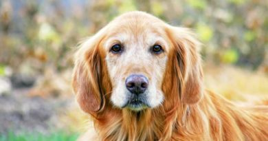 old-dog.jpg.838x0_q67_crop-smart