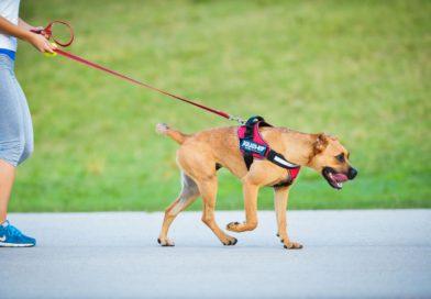 Intelligens kutyahám az egészségért – Bemutatta Duo-Flex® termékcsaládját a Julius-K9®