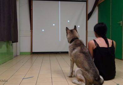 Kutyáink is úgy észlelnek, mint mi?