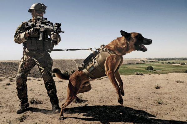 K9-kutya-army