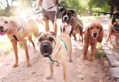 Kutyasétáltatás kezdőknek és haladóknak