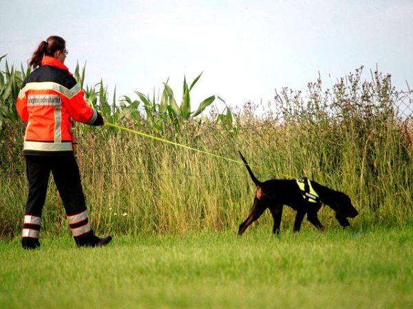 k9-kutya-emberkereses