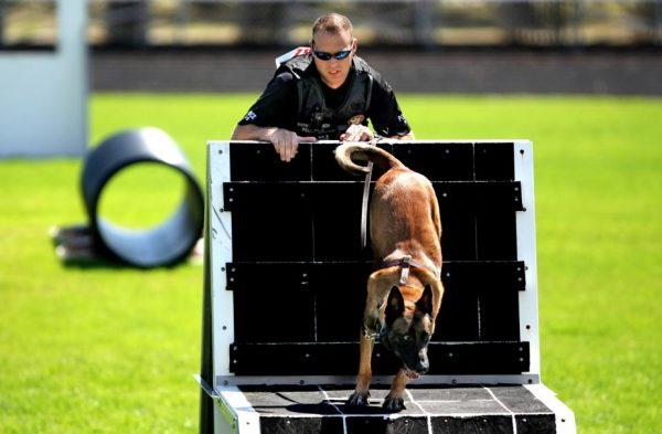 k9-kutya-verseny