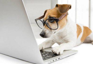 Már kutyafajtákat is felismer a Google