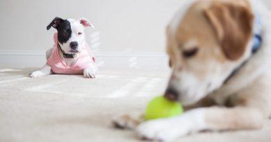 Kutyusunk is lehet féltékeny?