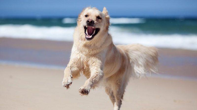 Kutatás: 3 millió gazdás kutya él Magyarországon