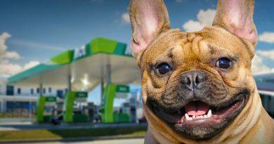 Meglepően sok kutya talált újra haza  a MOL töltőállomások mikrochip-leolvasóinak segítségével