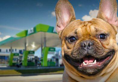 Még több MOL-kúton lehet az elveszett kutyákat beazonosítani