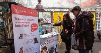 Idén 7 millió forint értékű adomány érkezett a vidéki menhelyen élő kutyáknak
