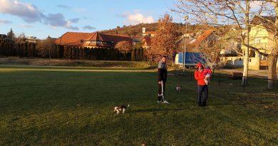 Utazz kutyával #1: Hotel Mayer Superior