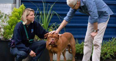 Szívszorító, de happy endes állattörténetek – Paul O'Grady és kutyái újra a képernyőn!