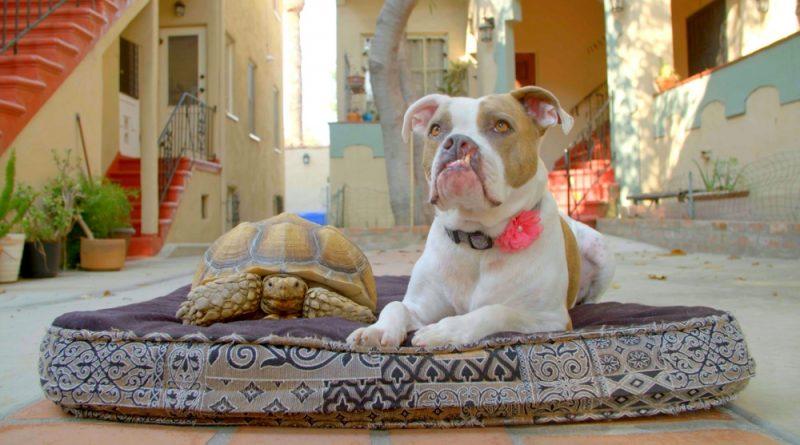 A kutya legjobb barátja – Új sorozat a Viasat Nature csatornán