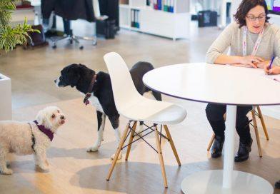 Kutyabarát munkahely lett az UNION Biztosító