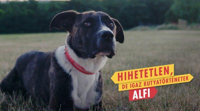 KUTYASZEMMEL – A kutyák ügye közös ügyünk