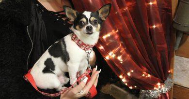 Walkie nyakörvek – kis és középtermetű kutyáknak