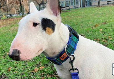 Színes nyakörvek a Mister Doggytól