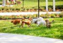 A felelős kutyatartásra hívja fel a figyelmet a Belvárosi Kutyafesztivál