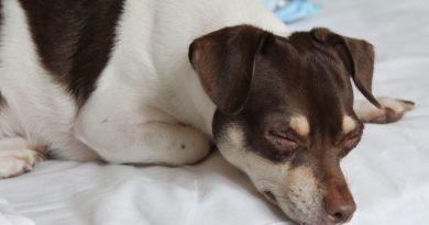 Papírok és oltások helyett fontosabbnak tartjuk a kutya személyiségét